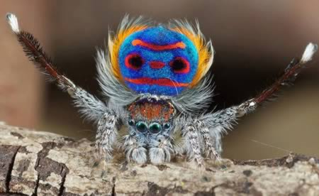 Amazing Animal Seen On www.coolpicturegallery.us