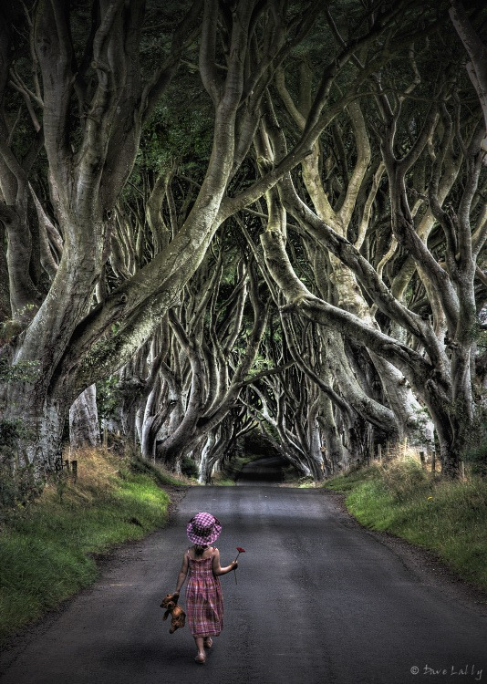 dark-hedges-4