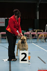 20130510-Bullmastiff-Worldcup-0694.jpg