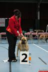 20130510-Bullmastiff-Worldcup-0694.jpg