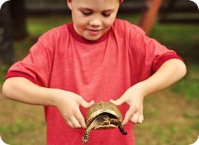 Jex turtle