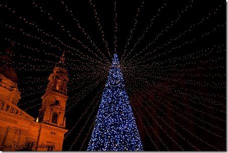 triss2_20121201_tree