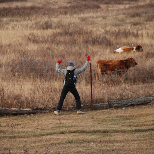 Xinjiang, Baihaba - Chloe & les vaches
