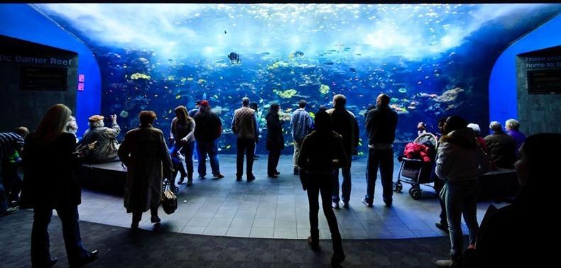 georgia-aquarium-13