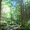Randonnée Mont Lusen, Forêt Bavaroise