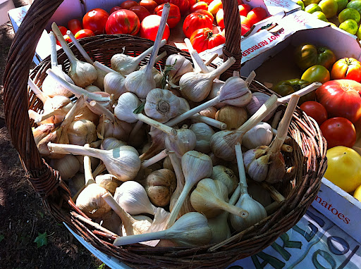 The tastiest, spiciest, freshest garlic ever.