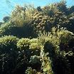 koral_30.jpg