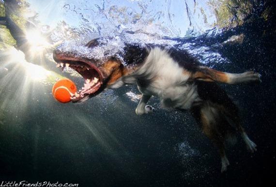 under-water-dog21-600x407