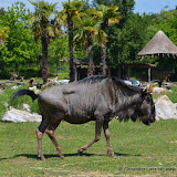 Safaripark_130527-005.JPG