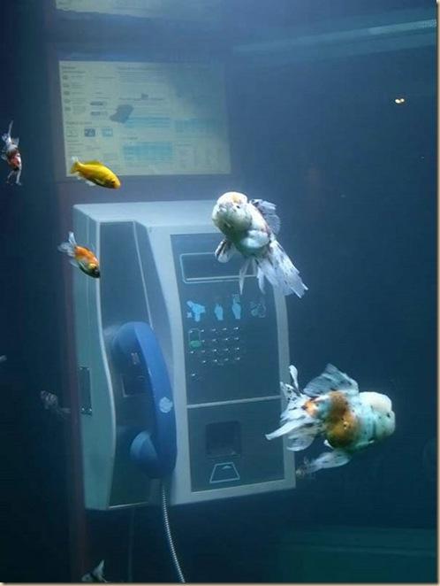 Aquariums créatifs et insolites-011