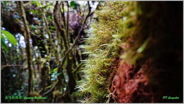 Cameron Highlands Mossy Forest
