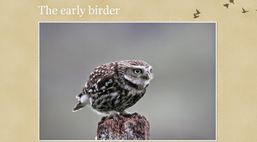 Early-birder
