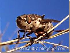 lalat bot yang mengerikan