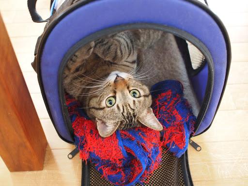 [写真]猫小屋でリラックスするグスタフ
