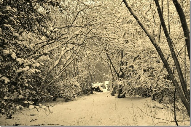 snow in trimely