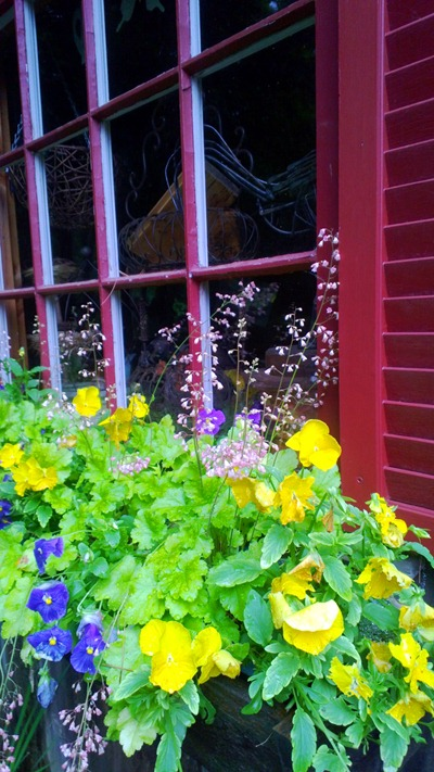 Summer Windowbox | Ideas in Bloom