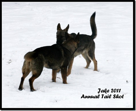 Jake 2011 Annual Tail Shot