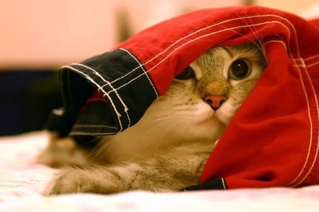 Los mejores y más lindos diseños de casas para gatos