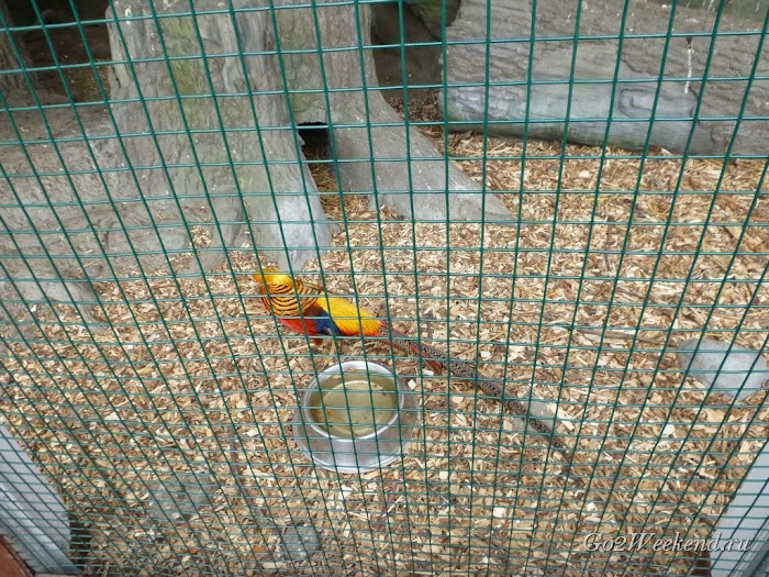 Kiev_Zoo_17.jpg