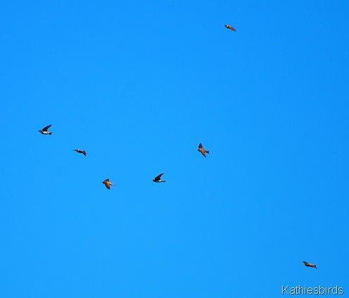 7. flying-kab