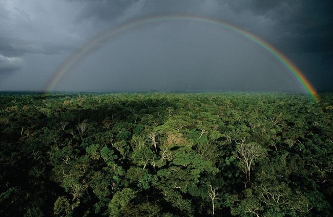 TEMPESTADE NA FLORESTA AMAZÔNICA PERTO DE TEFÉ, ESTADO DO AMAZONAS, BRASIL