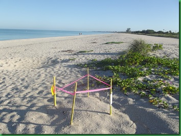 Friday Nokomis Beach (50)