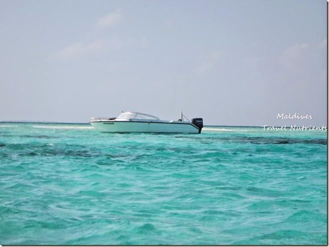 馬爾地夫 沙洲 浮潛 (4)
