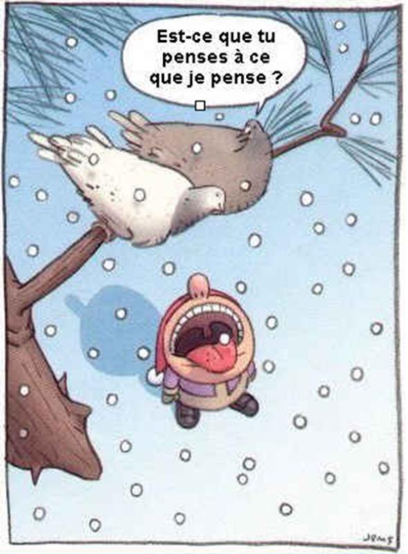 pigeon arnaque