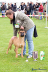 20100513-Bullmastiff-Clubmatch_31076.jpg
