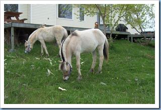 2004_0508_foals_lawn_04
