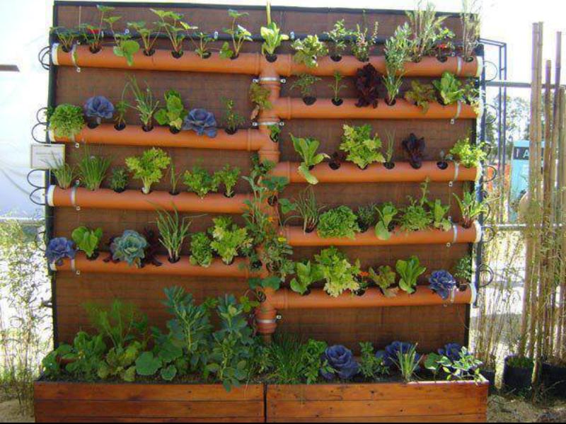 jardim vertical violetas ? Doitri.com