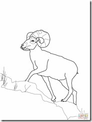 bighorn-sheep-coloring-page