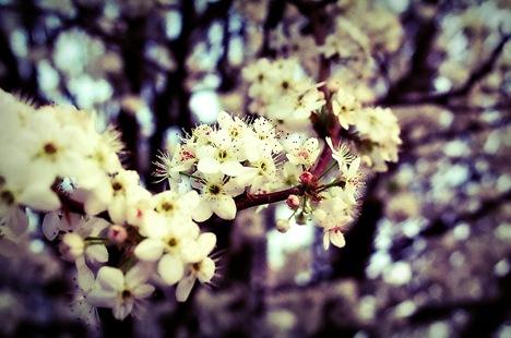 spring plain