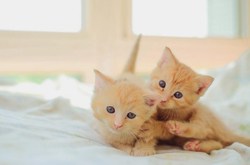 may kittens-19453