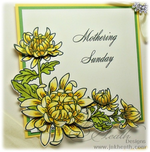 Chrysanthemum_JI_HOP2