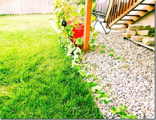 Garden July 17-2