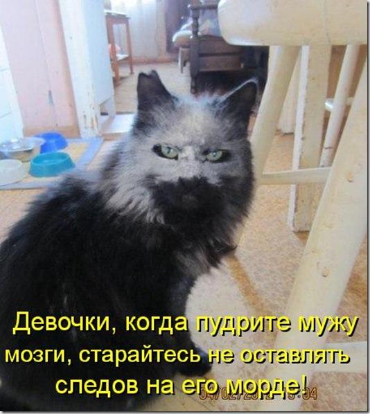 kotomatritsa_Jz