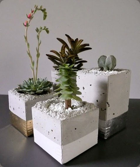 succulents bloodandchampagne.com 6131
