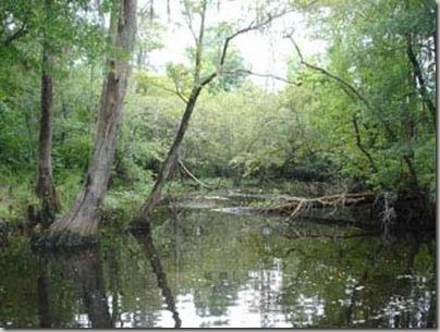 hutan-rawa