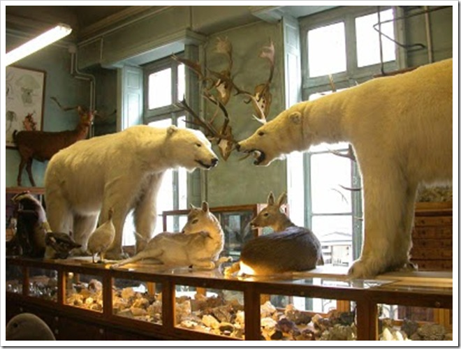 deyrolle_paris_taxidermy_shop