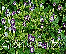 Glória Ishizaka -   Kyoto Botanical Garden 2012 - 124