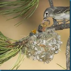 feed baby birds