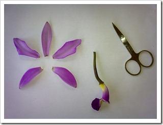 Anatomia da orquídea