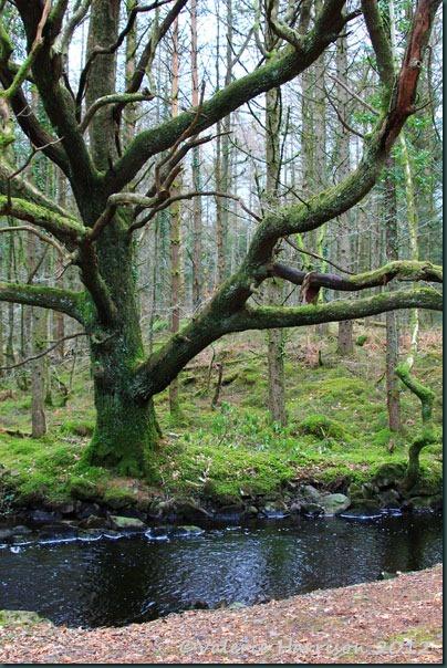 10-old-tree