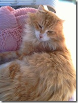 Orange-Glow-Persian- 002 (Small)