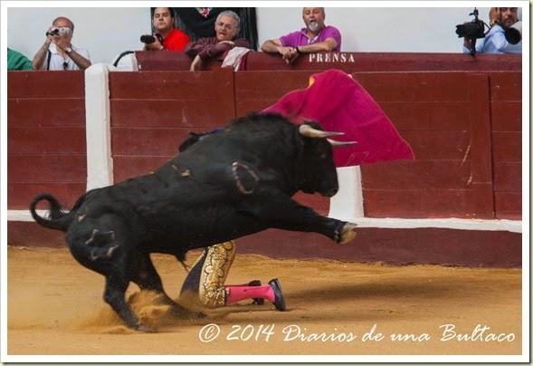 Toros 2014 (1)-2