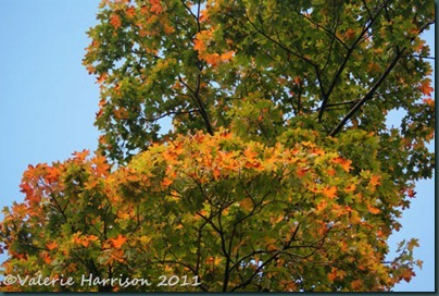 11-autumn-colours