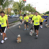 Pet Express Doggie Run 2012 Philippines. Jpg (79).JPG