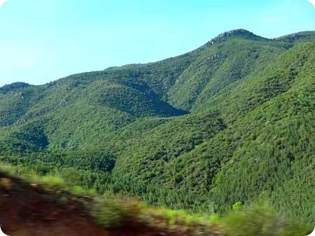 7-tree-area