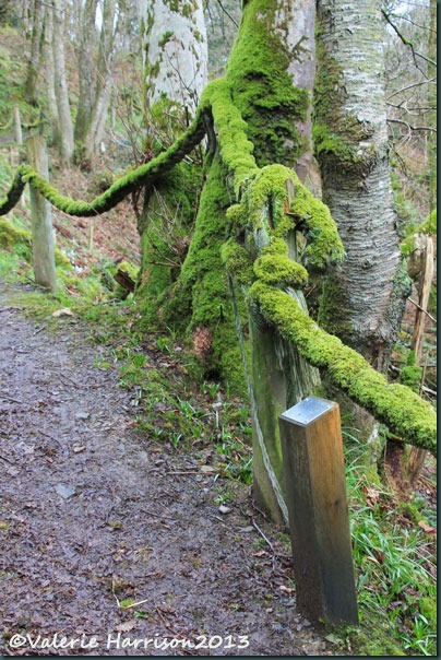 3-moss-and-post